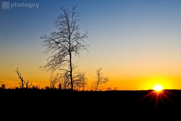 Lone Tree Sunset