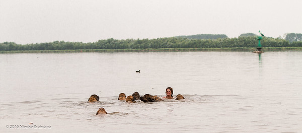 Leonbergers having Fun aan het Erkemederstrand
