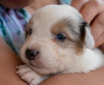 2019-09-01 Foxpointe Puppy 3