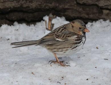 Poppoff birds Feb 1 2017