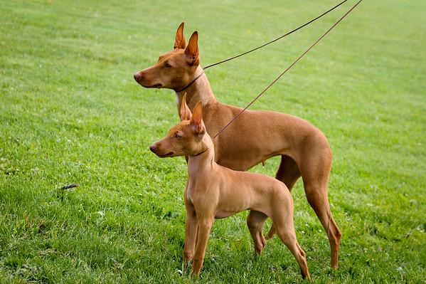 RHR  dogs