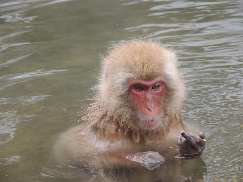 Monkey's middle fingerDSCN6199.jpg