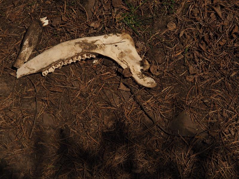 Looks to me like a boomerang with teeth.