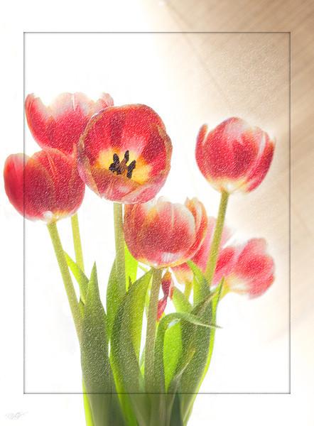 Red Flower 4.jpg