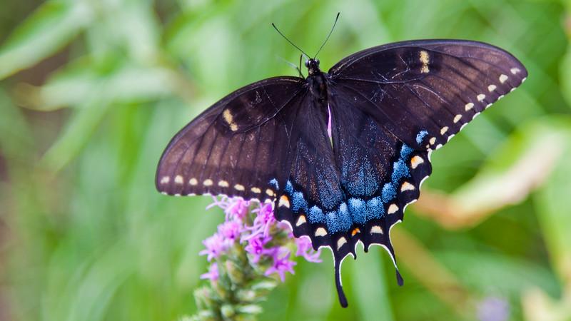 2010 Lady Bird Johnson Wildflower Center