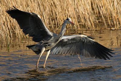 Pembrokeshire Wildlife
