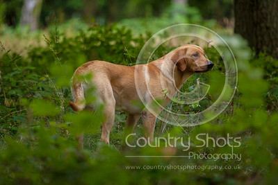 Thrift Wood Retriever Training 21st July
