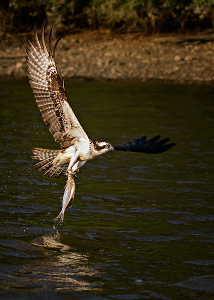 James River Eagle Tour