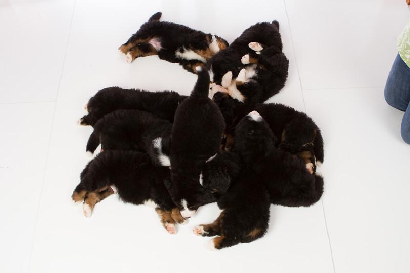 2013-Pearson Pups-Jun02-0516.jpg