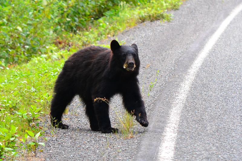 Cassiar Highway British Columbia, Canada