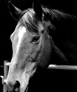 Horse candid profiles