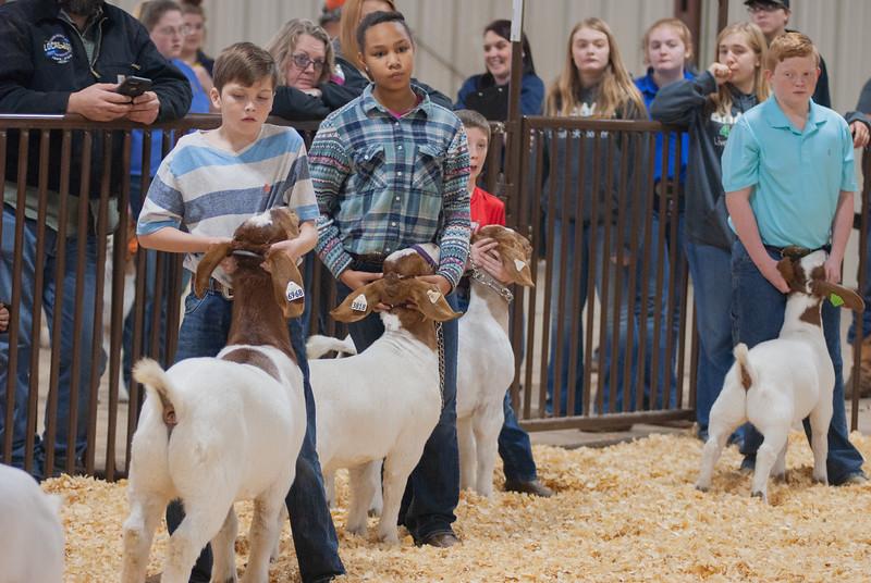 kay_county_showdown_goats_20191207-22.jpg