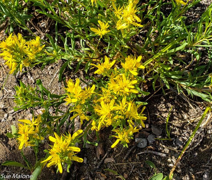 08-18-2020 Boundary Springs Hike-4.jpg