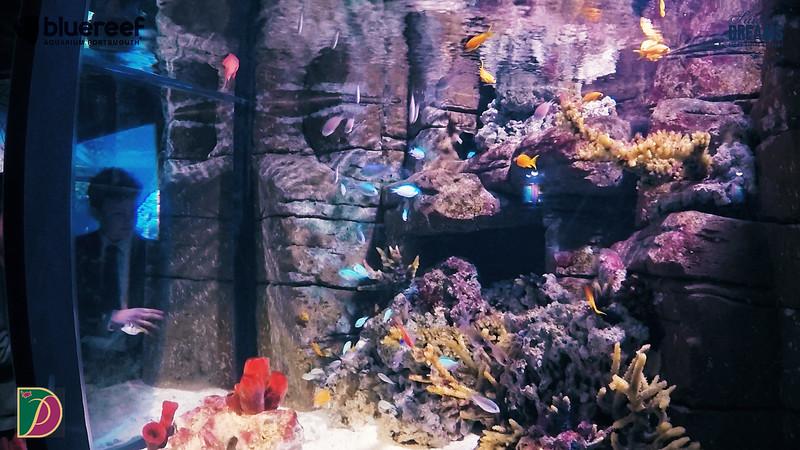 Blue Reef.00_12_18_36.Still013.jpg