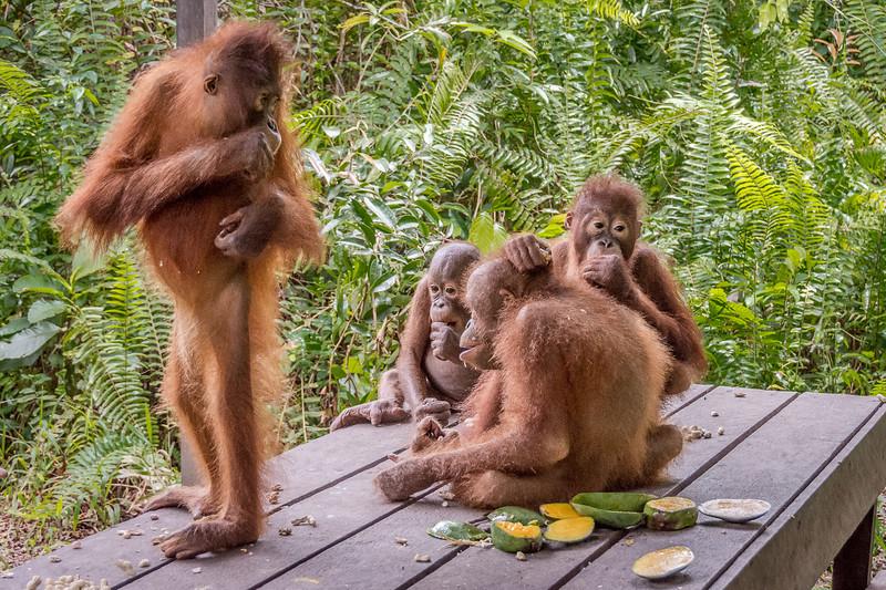 Borneo-2244-2.jpg
