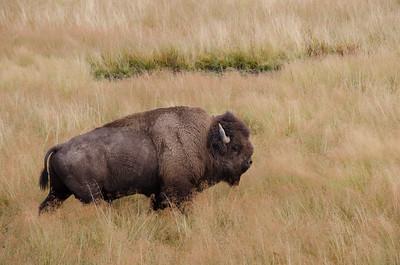 Yellowstone Nat'l Park - Sept. 2014