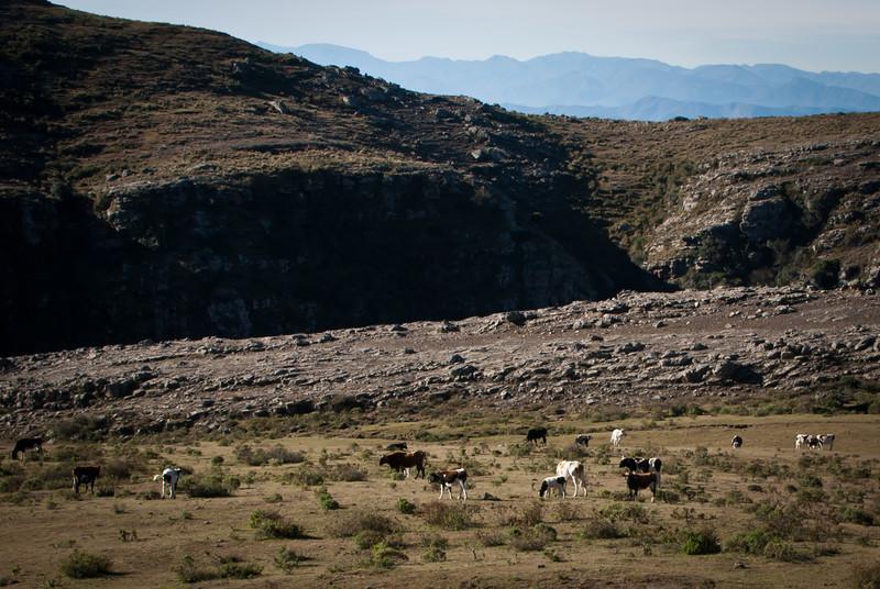 Tarija 201205 Valle de Los Condores (104).jpg