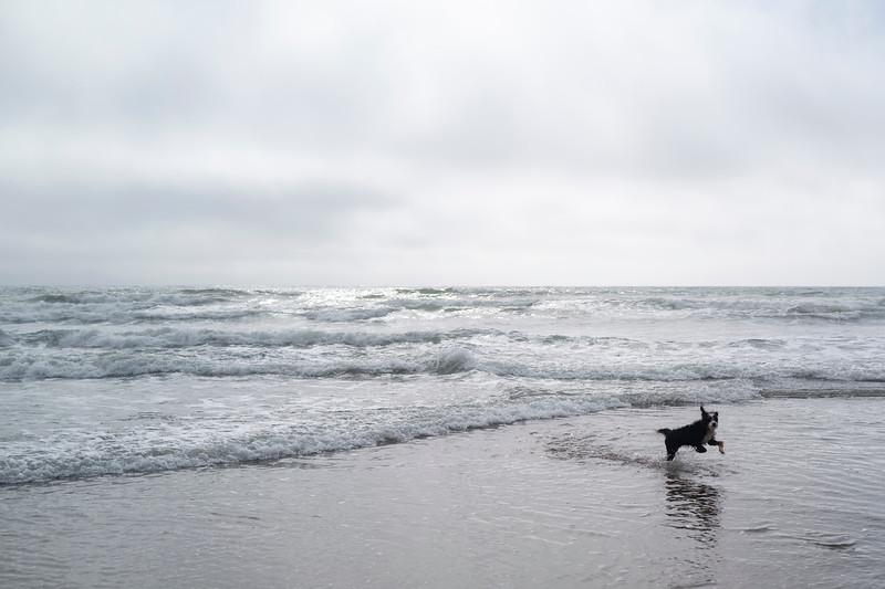ocean beach quarantine 1161205-8-20.jpg