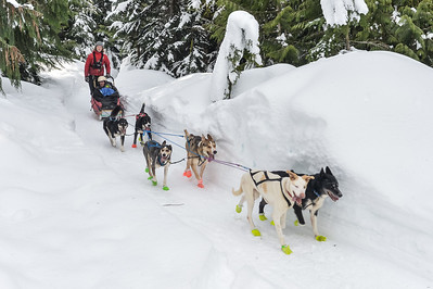 Wed Dogsled
