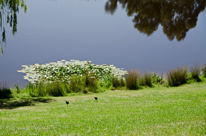 and its peaceful, reflective garden (2)