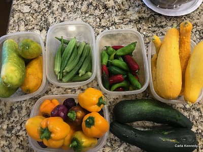 2019 09-01 Veggie pick and critters