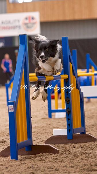 Large dog jumping  1077.jpg