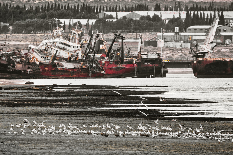 SA1_4923_ship graveyard.jpg