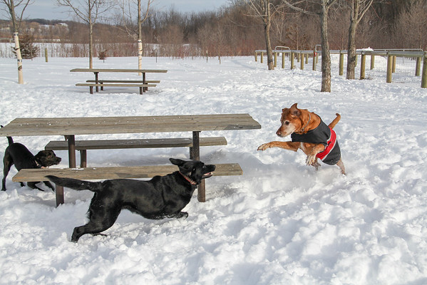 Amy - Dog Park