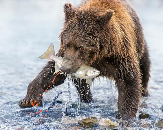 Kodiak-Katmai, Alaska (8/20)
