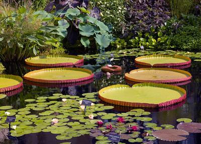 Gardens at Longwood