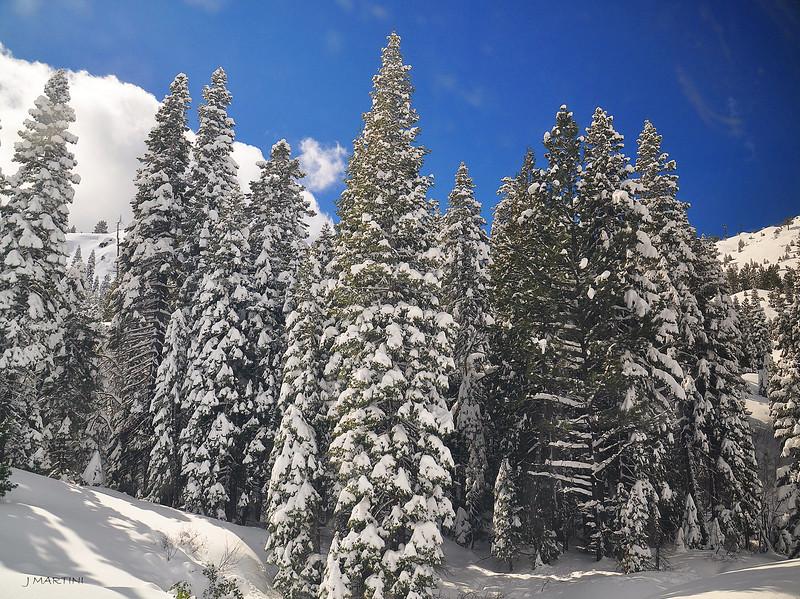SNOW TREES 3-9-2018.jpg