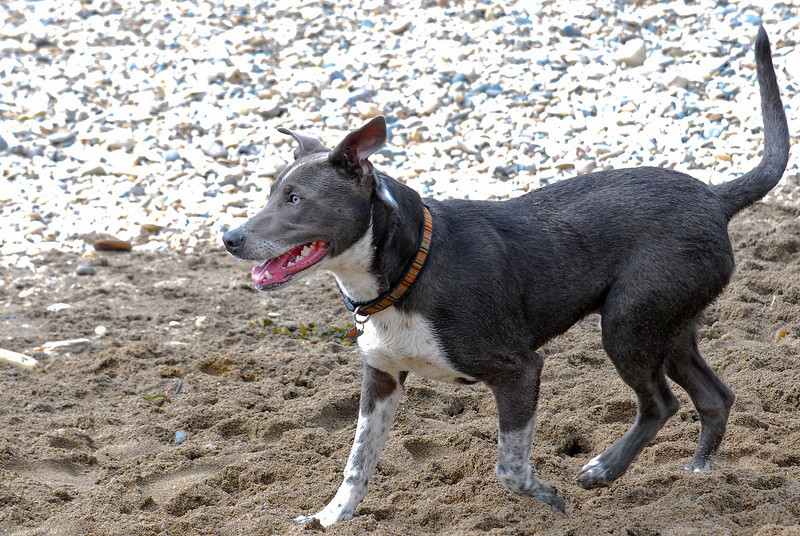 dogs_beach-040.jpg