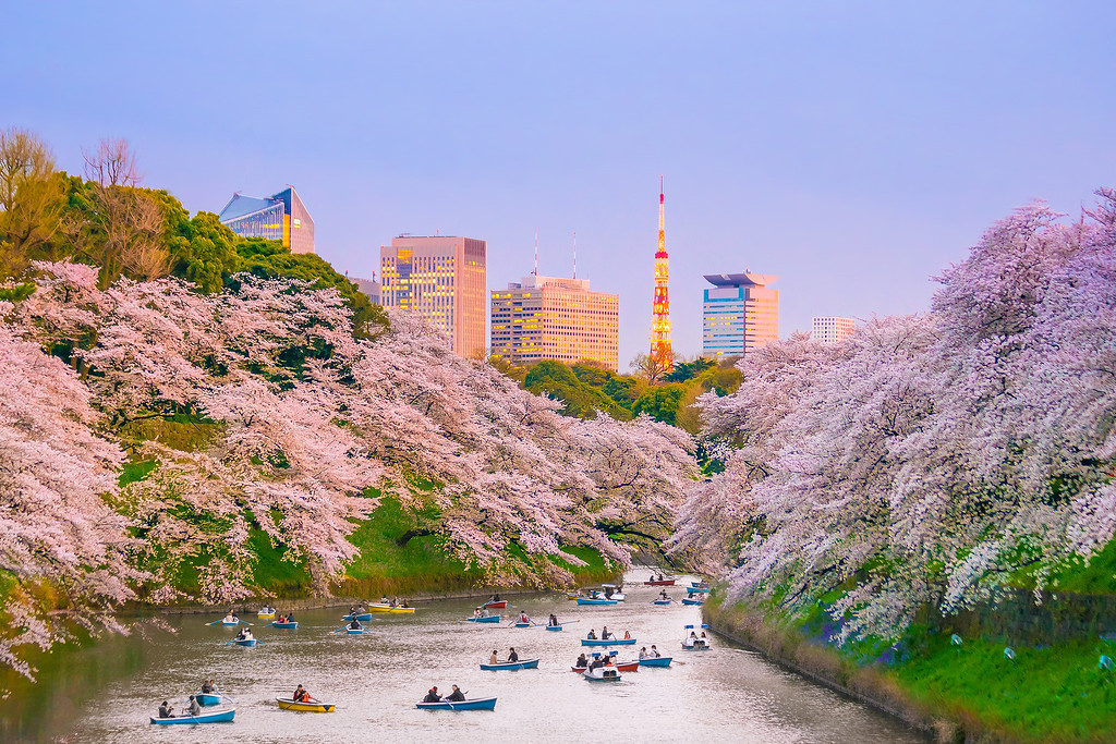 Chidori-ga-fuchi Moat (Imperial Palace Area) with cherry blossoms. Editorial credit: f11photo/ Shutterstock.com