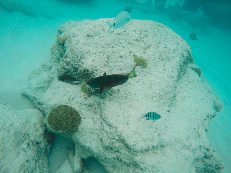 Bermuda-24.jpg