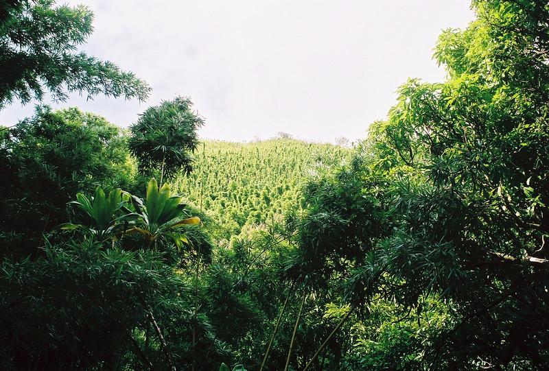 Hawaii-206.jpg