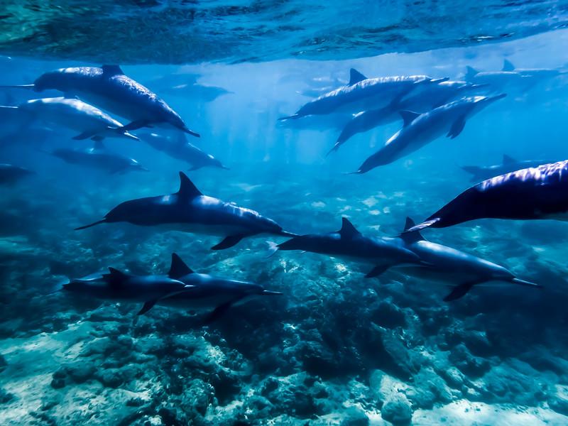 Dolphin School 1