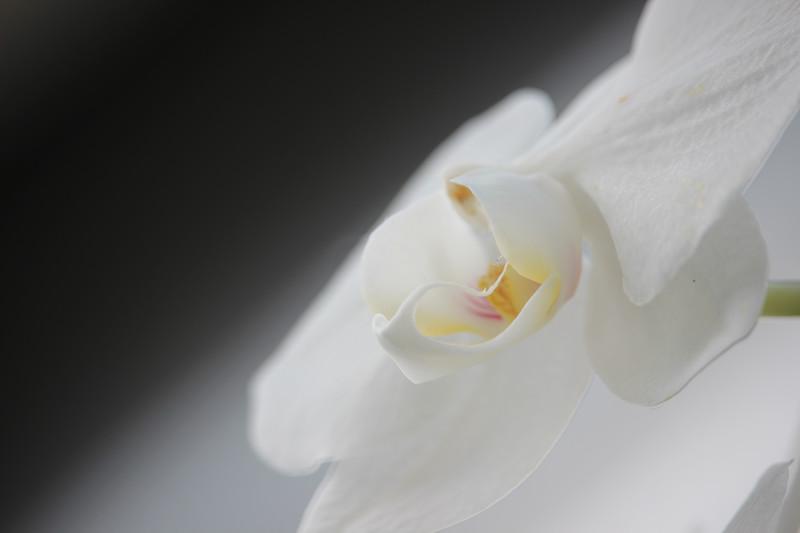KoRedfield-Floral50.jpg