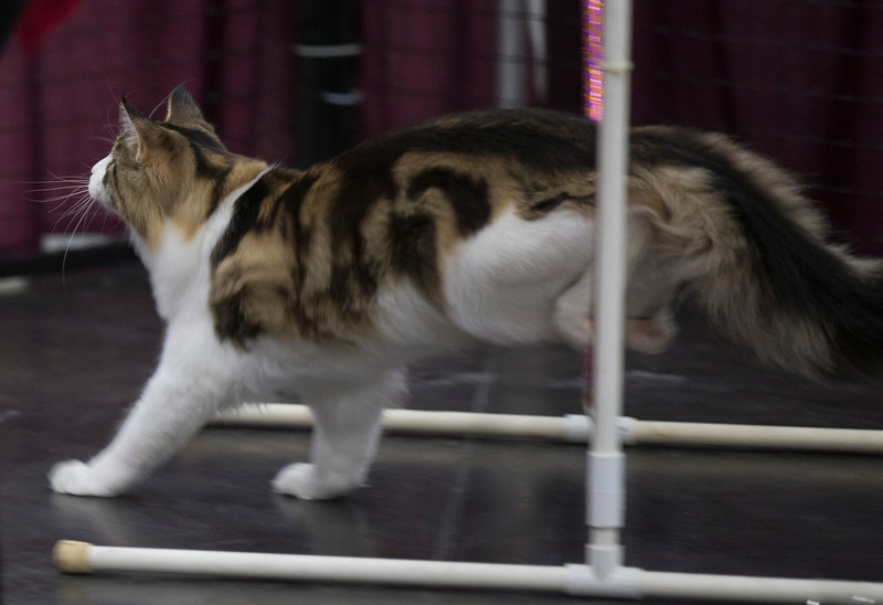 CatShow2014213.jpg