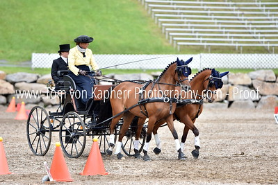 Single horse and Pair, Intermediate and FEI