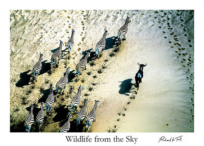 Wildlife from the Sky