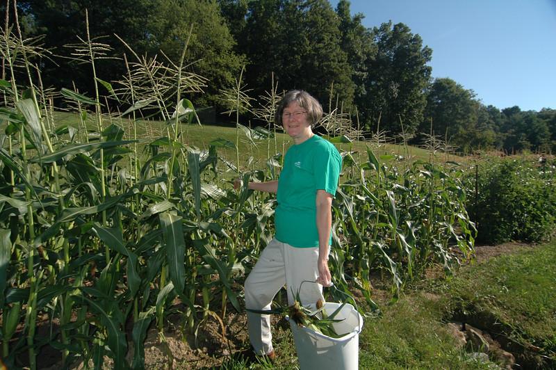 carol picking corn