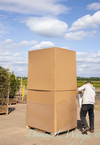Readying for shipment_5559.jpg