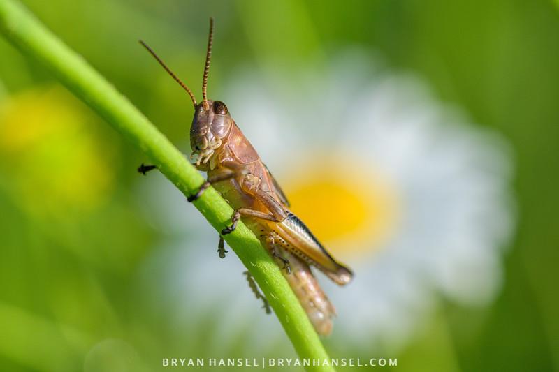"""How ya doing?"" asks grasshopper."
