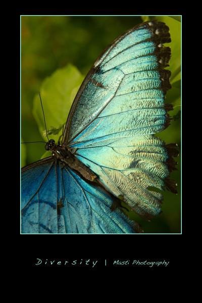 Butterflies-blue.jpg