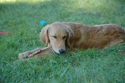2009 September Finley