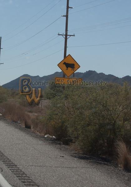 AZ Mountains an stuff