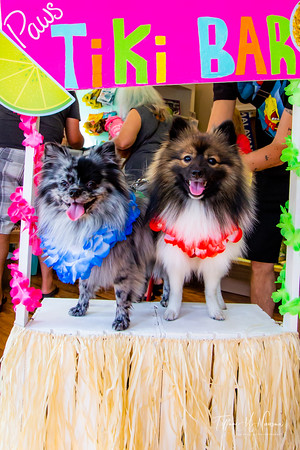 Lapdog Luau at Paws on Main Aug 8 2020