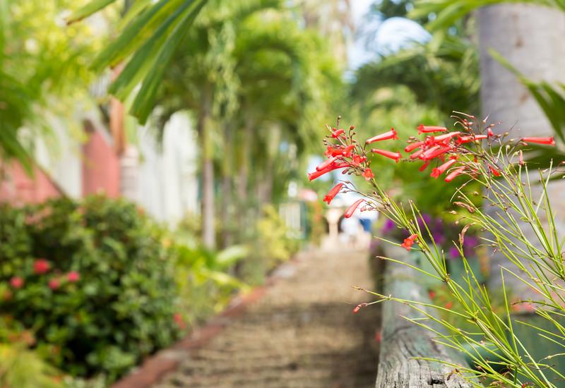 Ninety nine steps framed by red flower blossom in Charlotte Amalie St Thomas