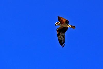 El Paso Audubon trip to Phoenix, Jan. 2013