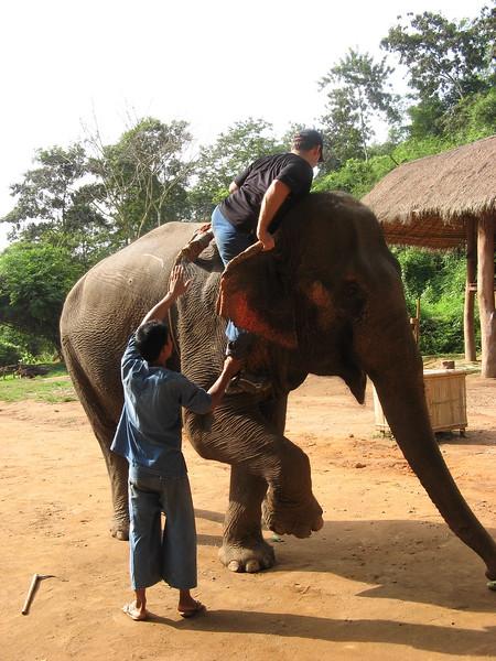 Scott trying to climb down along the elephant's leg